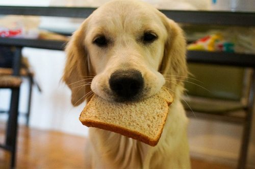dogwithbread